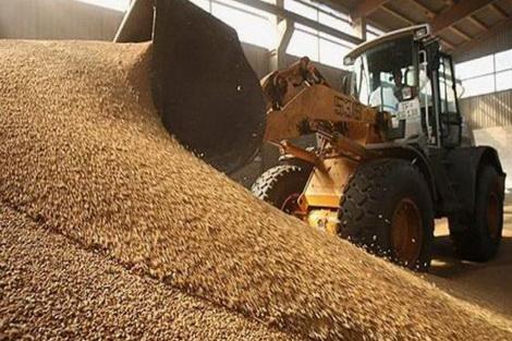 Госрезерв объявил тендер на закупку зерна на 121 млн грн