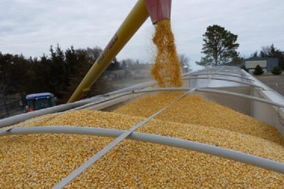 Трейдеры выбрали более 36% квоты на экспорт пшеницы