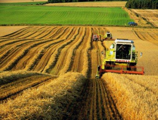 Украинские аграрии обеспечили 37% валютных поступлений от экспорта