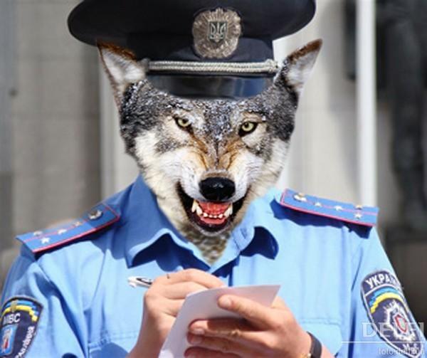 Областную полицию Киевщины заподозрили в содействии рейдерам ТЛК «Арктика»