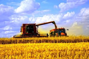 Аграрии собрали 24 млн тонн пшеницы