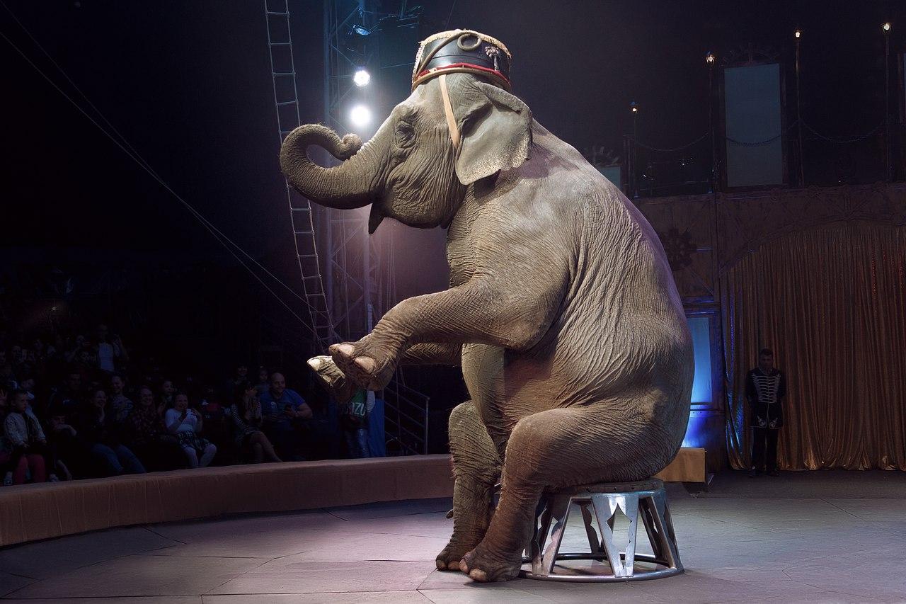 Общественники и бизнес раскритиковали «животную» инициативу Верховной Рады