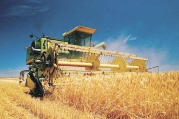 Аграрии собрали более 21 млн тонн ранних зерновых