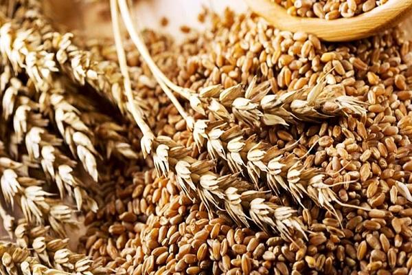 Аграрии уже намолотили почти 17 млн тонн зерна
