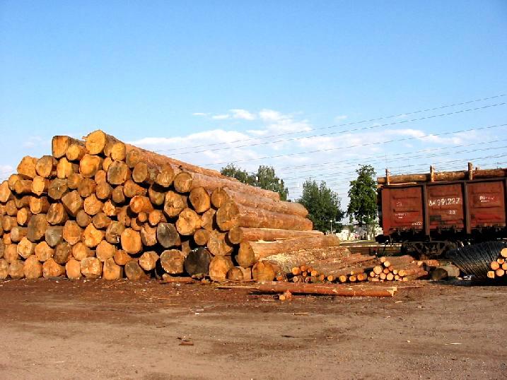 В Украине будет восстановлена деревообрабатывающая промышленность