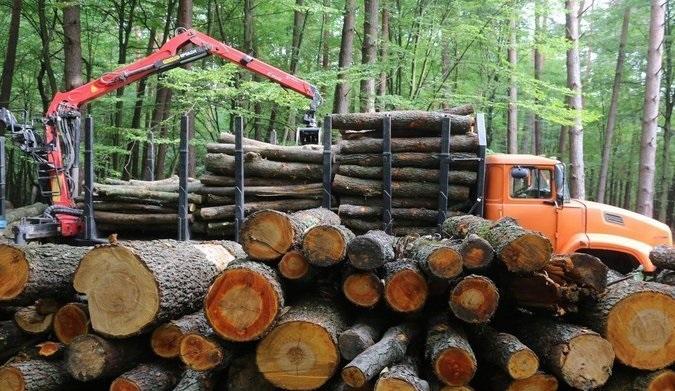 За контрабанду леса предусмотрена уголовная ответственность