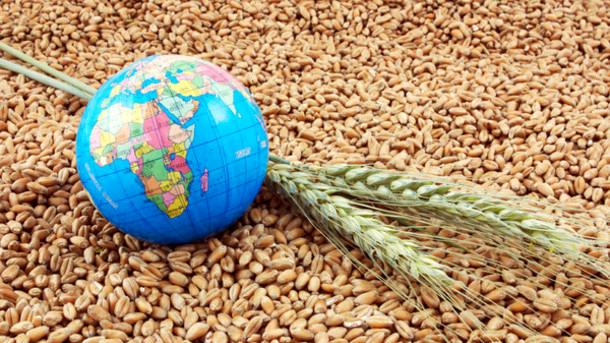 Экспорт украинского ячменя превысил показатель прошлого сезона на 19%