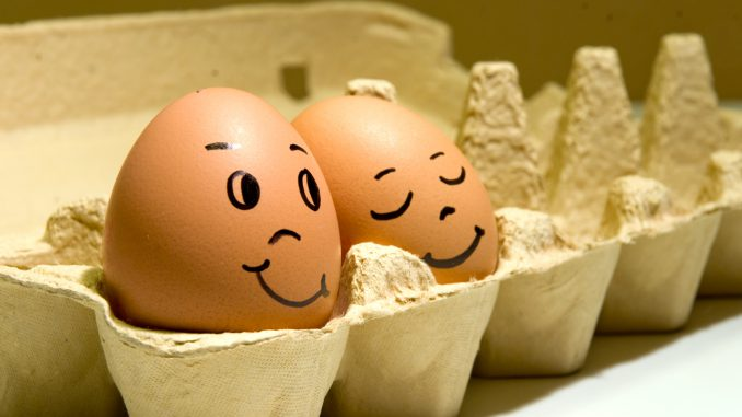 Золотые яйца: птицефабрику обокрали почти на миллион