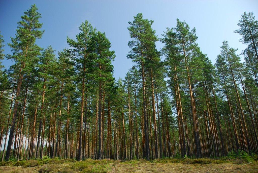 Гройсман анонсирует программу по восстановлению лесных фондов