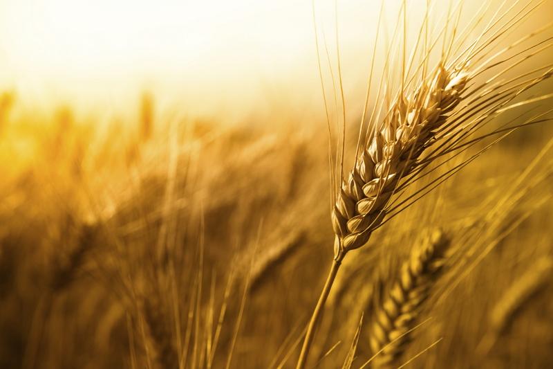 Украина из-за засухи может остаться без урожая