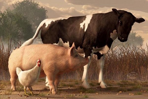 В госбюджете на поддержку животноводов заложено 4 млрд грн