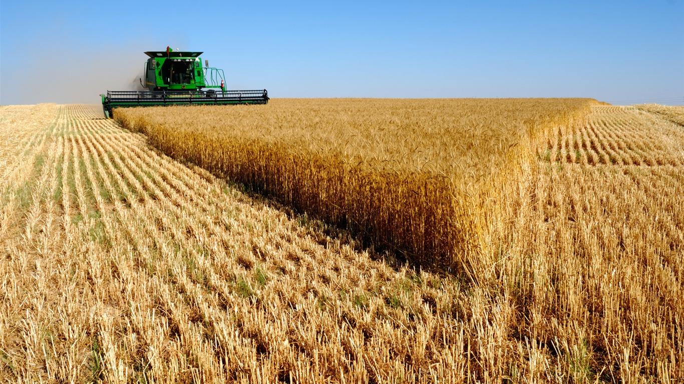 США снизили прогноз производства зерновых в Украине и экспорта