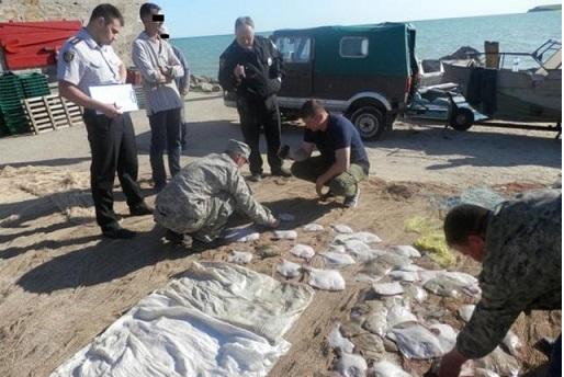 С начала года органы рыбоохраны выявили нарушения с убытками на 83 млн грн