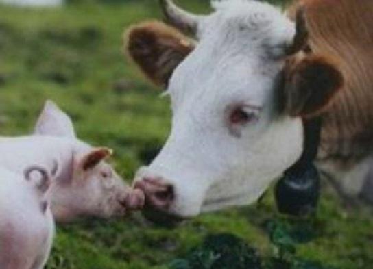 Животноводы в 2018 году на поддержку получат 3 млрд грн