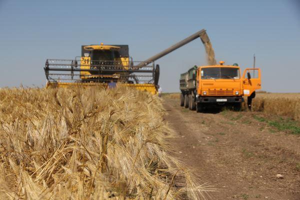 Стоимость украинских агрохолдингов за последние полгода выросла на 11,1%