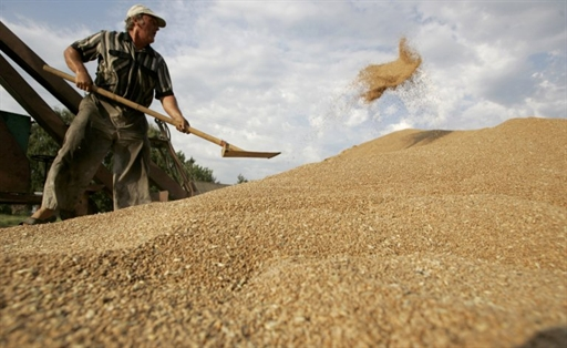 В Украине аграрии намолотили более 57 млн тонн зерна