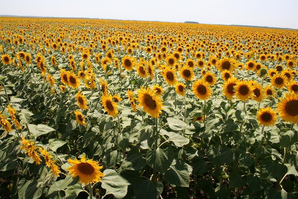 За 9 месяцев украинские аграрии экспортировали продукцию на $10,4 млрд