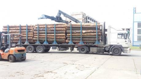 СБУ прикрыла крупный теневой канал экспорта древесины
