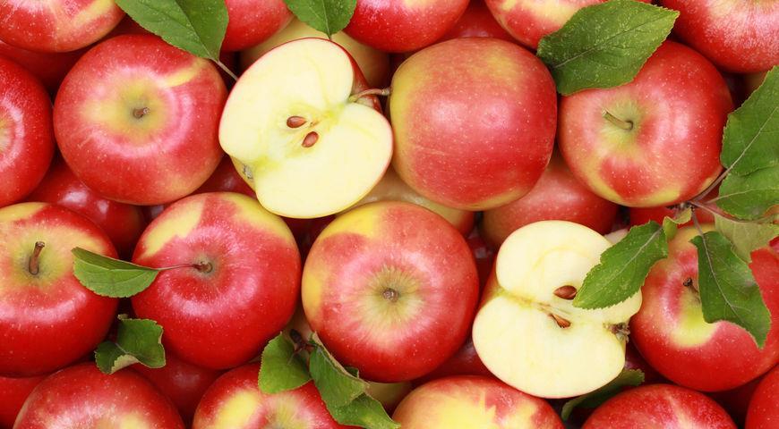Украина нарастила экспорт яблок в 3,2 раза