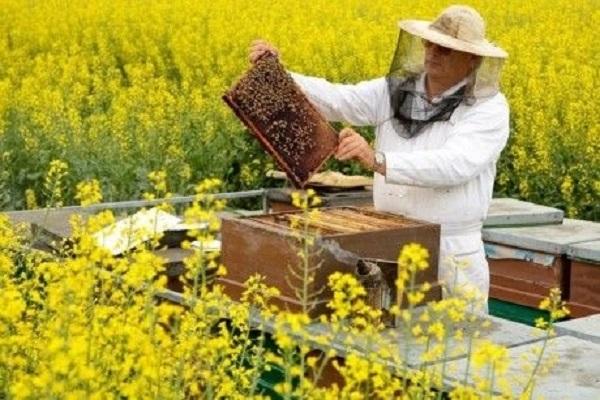 В Украине насчитали более 400 тыс. пчеловодов