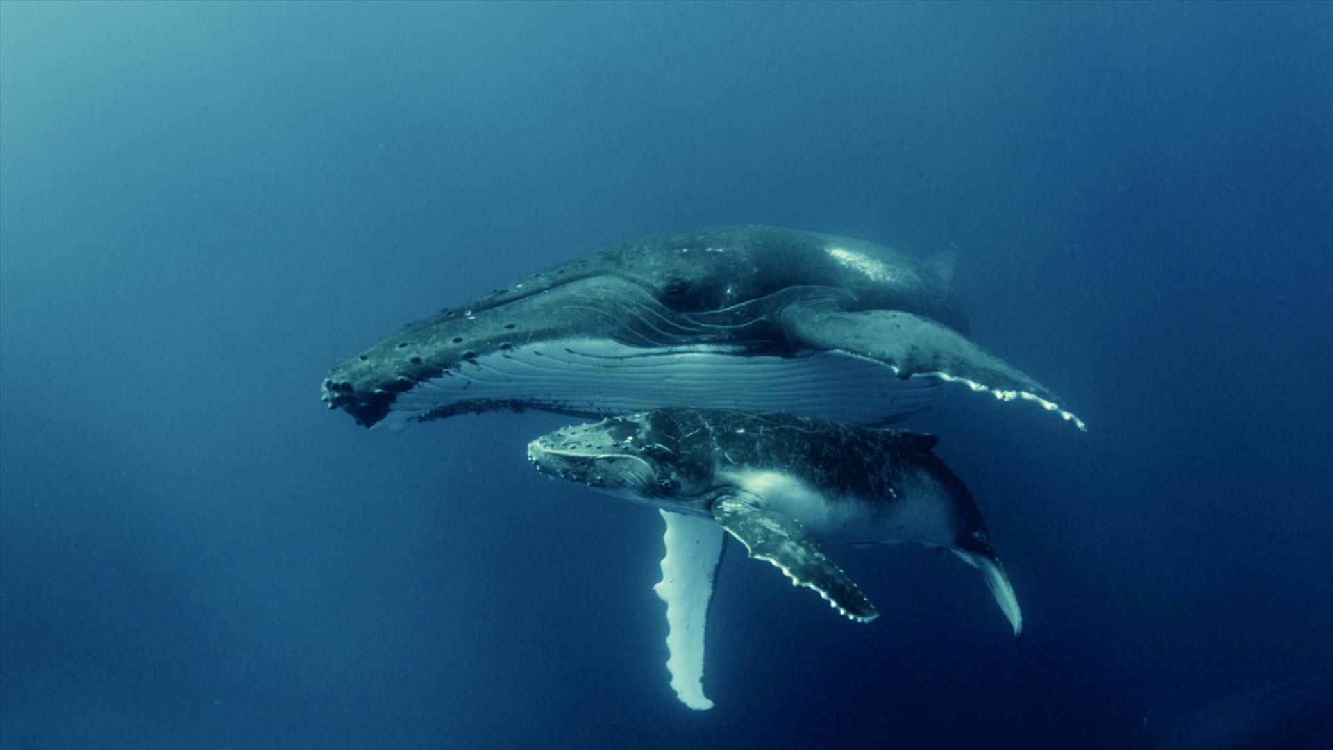 Шумовое загрязнение людьми океана значительно сокращает подводную фауну, – ученые
