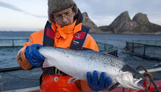 Норвегия является основным импортером рыбы и морепродуктов в Украину