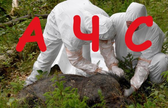 В Украину запретили ввоз свиней из ряда стран ЕС