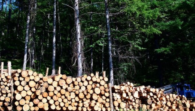 Вырубка леса нанесла свыше 50 млн гривен убытков - Госэкоинспекция