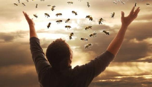 «Укрпочта» показала чудесное «воскресение» пчел (видео)
