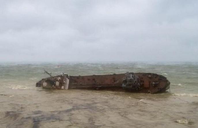 На пляже Одессы возле затонувшего танкера Delfi нашли мертвого дельфина