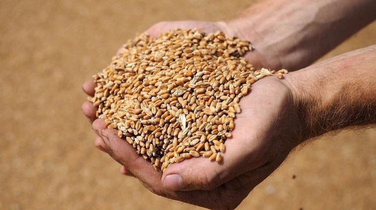 В Украине из-за плохой погоды снижен прогноз урожая зерновых