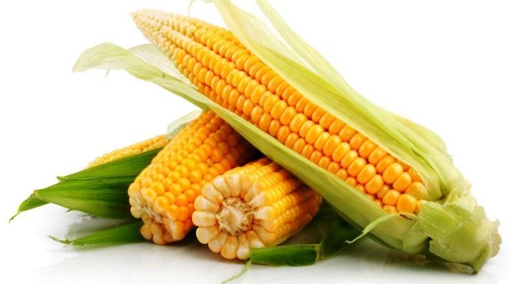Украина уже экспортировала 14 млн т кукурузы