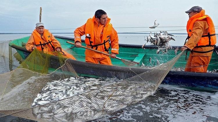 Украина за 7 месяцев экспортировала рыбу на $18,7 млн