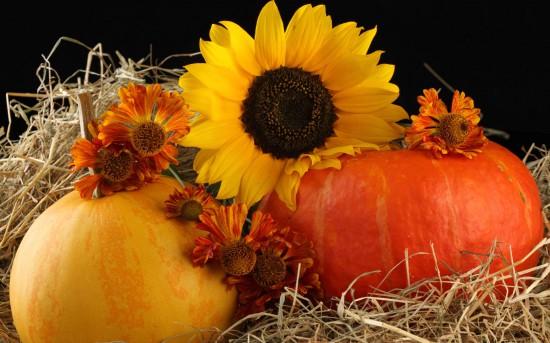 За год сельхозпроизводство сократилось на 11,5% – Госстат