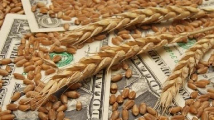 Прогноз урожая и экспорта зерновых улучшен