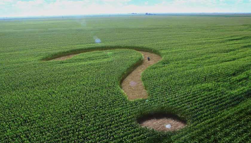 Большинство украинцев за мораторий на продажу земли-ОПРОС