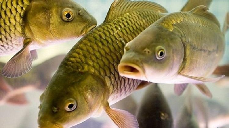 Украина экспортировала рыбы на более $2,4 миллиона