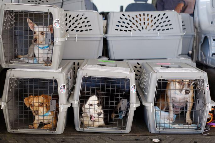 Канада после гибели щенков на рейсе МАУ ужесточила правила ввоза собак