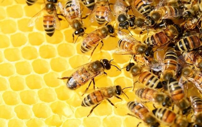 Украинские пчеловоды получат около 240 млн грн господдержки