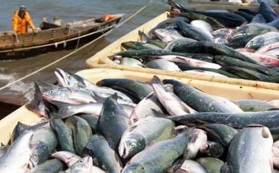 В Украине вылов рыбы вырос почти в 1,5 раза