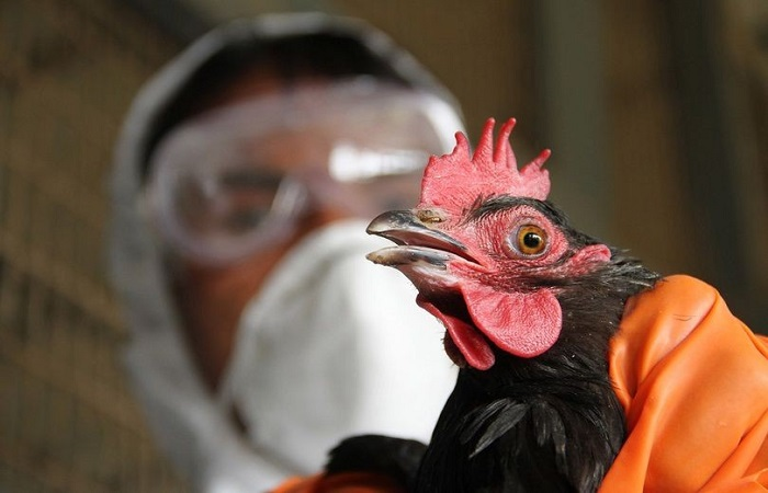 Более 10 стран запретили импорт курятины из Украины