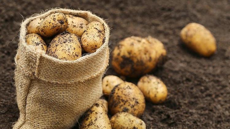 В Украине на 10% подешевел картофель