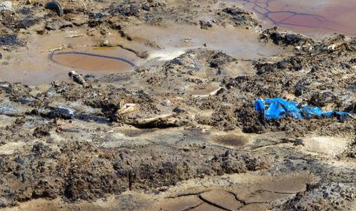 Госэкоинспекция за полгода насчитала 200 млн гривен убытков в сфере защиты земель