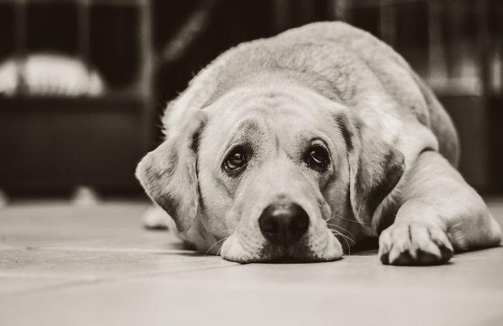 С начала года в Украине зафиксировано больше 200 случаев жестокого обращения с животными