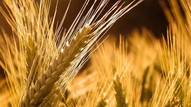 Экспорт зерновых превысил 7 млн тонн – Минагрополитики