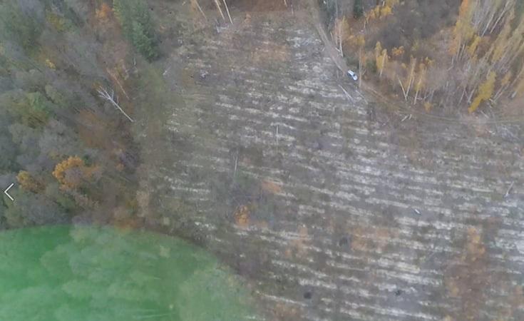 Чиновников «Киевоблагролеса» подозревают в незаконной вырубке леса - ГБР