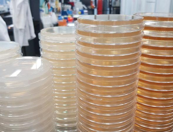 Биотехнологический стартап MicroBioGen из Австралии, перерабатывающий отходы в топливо, планирует выйти на фондовую биржу ASX