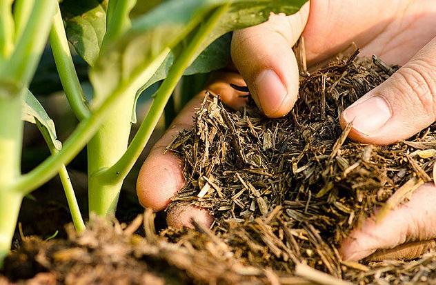 Арабская компания планирует производить в Украине органические удобрения