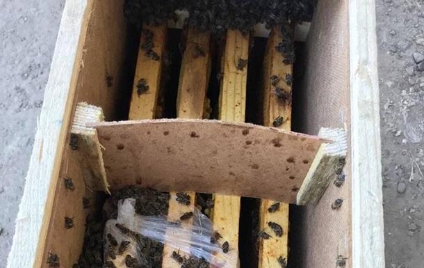 Укрпочта временно прекратила доставку пчел