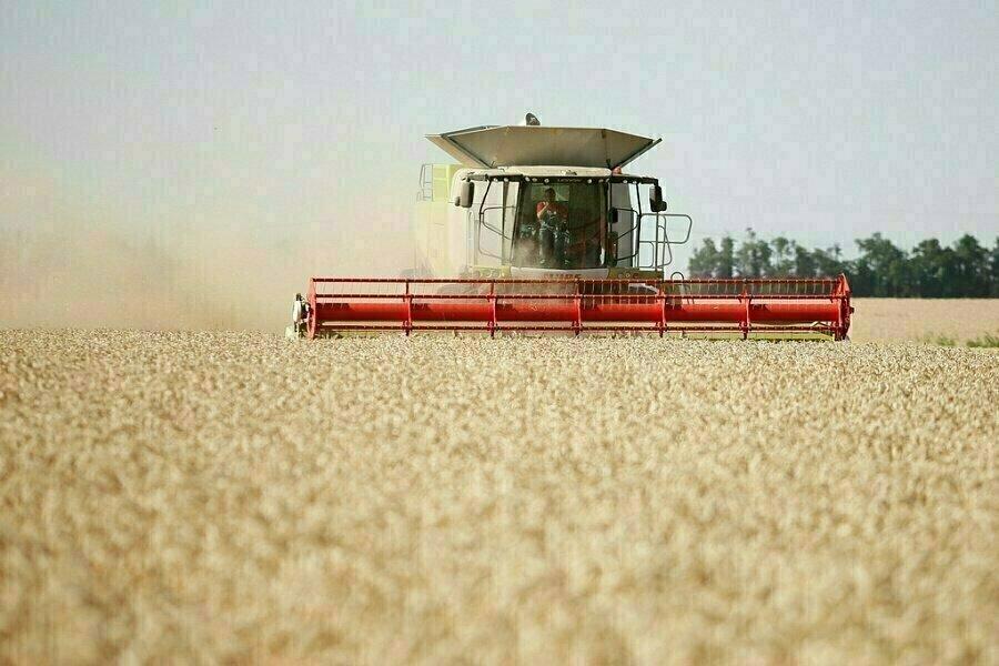 Украина установила исторический рекорд по сбору урожая зерновых